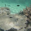 Hier sind die Korallen noch intakt