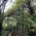 Wege entland der Baumkronen