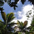 Eine Wanderung im Tobago Forest Reserve