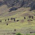 Hier wurden die Moais produziert, viele kamen nie von hier weg
