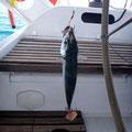erster Fisch dieser Reise
