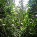 Dichter Wald umgibt den Pfad