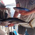 Julian fängt einen Thuna und eine Makrele