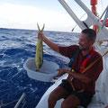 Die Reise beschert uns reichlich Fisch