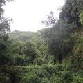 Der Lorbeerwald bei La Galga