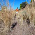Hohes Gras am Wanderweg