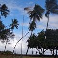 Auf eine Kokosnuss hoch oben auf der Stange