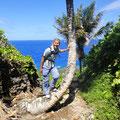 Palmen wachsen fast überall
