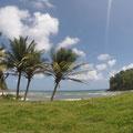 Im Osten sind viele Kokospalmen
