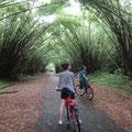 Die Bamboo Cathedrale ist echt sehenswert