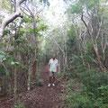 Durch den eher trockenen Wald auf den Mt. Quill