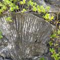 Niue ist ein großer Korallenstock