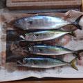 Gleich am ersten Tag Fisch an der Angel