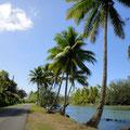 Palmen säumen die Straße