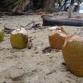 Cocosdrink gefällig