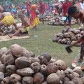 160 Kokosnüsse hat jedes Team