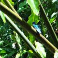 Viele Kolibris, endlich einer der ruhig sitzen bleibt