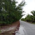 lange Hecken vor Privatgrundstücken