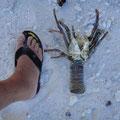 Diese finden wir am Strand, hat eine Möve gegessen