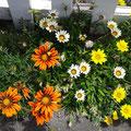 Überall hübsche Blumenbeete