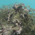 Erste Unterwasseraufnahmen am Riff