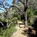 Der Wanderweg führt teilweise durch Olivenhaine