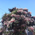 Baum in voller Blüte