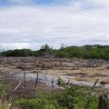 Ausgetrocknete Mangroven