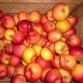 Äpfel und Birnen zur Zeit Ausverkauft
