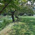 小さな園地にでます。春は桜がきれいです。ベンチもあるのでピクニックも気持ち良さそう!