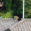 お猿さんのお尻は本当にあかいですね。