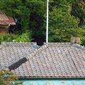 別のある朝、またお猿さんが! 今度はお屋敷の瓦屋根の上にいました!