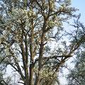 Mehrfamilienhaus im Birnbaum: Spechthöhlen
