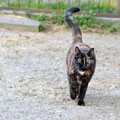 Röschen - EKH Katze