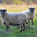 2 Schafe