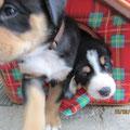 Eddy und Blue