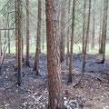 30. Juli: Waldbrand zwischen Föritz und Weidhausen