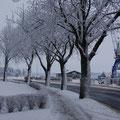 Der Schleswiger Stadthafen im Winterkleid