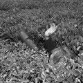 Reportage in der organischen Teefarm Luponde im Süden Tansanias - 2006