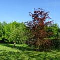 Chambre d'hotes senlis chantilly parc asterix paris ermenonville abbaye de chaalis crepy en valois sud oise picardie gite senlis chantilly asterix