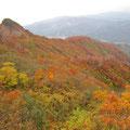 金冠山紅葉。