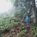 1500m付近、杉の大木が続くやせた尾根が延々と続く(汗と涙・・・)