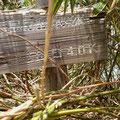 笹藪の中に標識発見