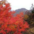秋色満載。