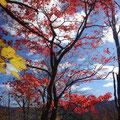 空に映える紅葉。
