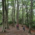 静かなブナの森
