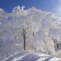 綺麗な樹氷。(生クリームで飾ったようでした。)
