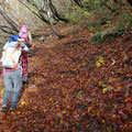 急登と落ち葉の絨毯。