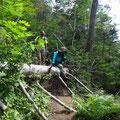 倒木が何ケ所もあり、なかなか進みませんでした。