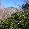 シャクナゲ越しに登む山頂。